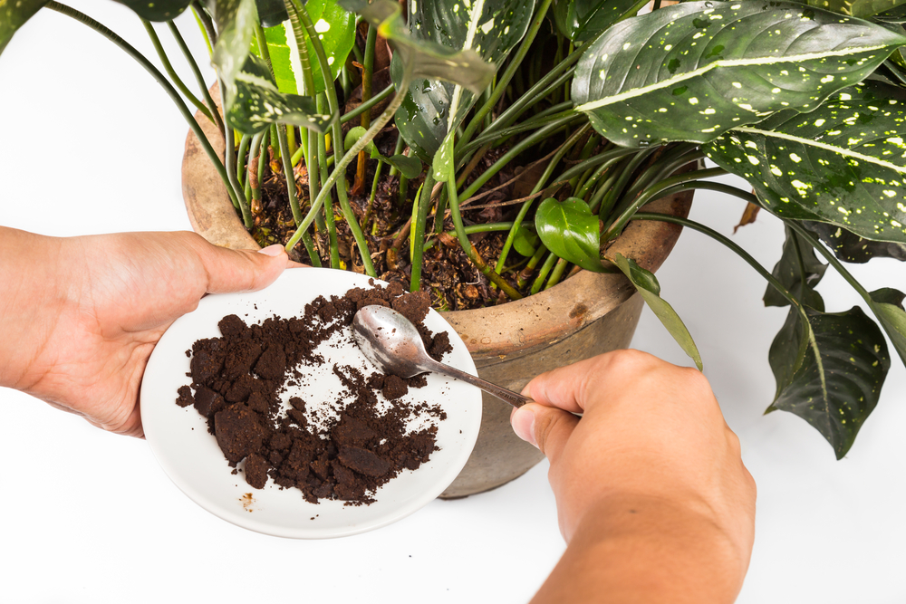 Are coffee grounds good for houseplants?