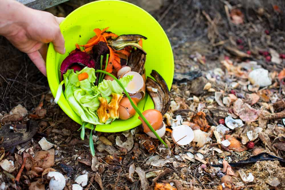 Hand pouring food scraps into compost pile