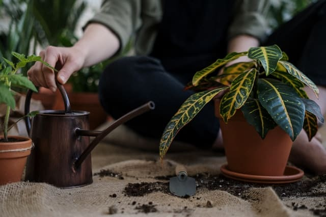 Plant and Watering Can
