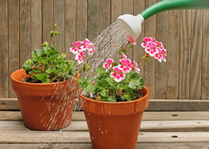 Can You Water Houseplants With Tap Water