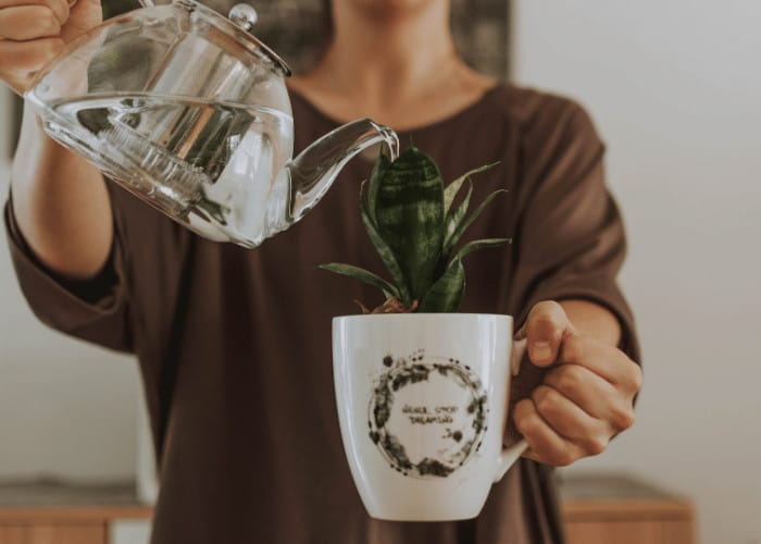 Watering Plant in Coffee Cup