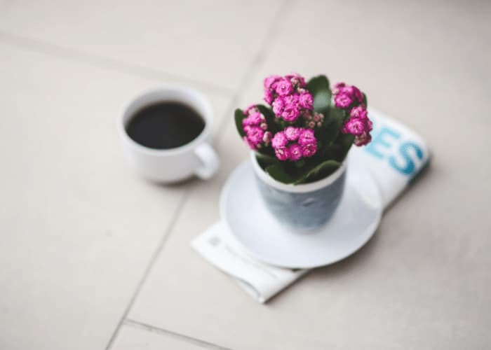 Pink Kalanchoe in a Pot next to coffee